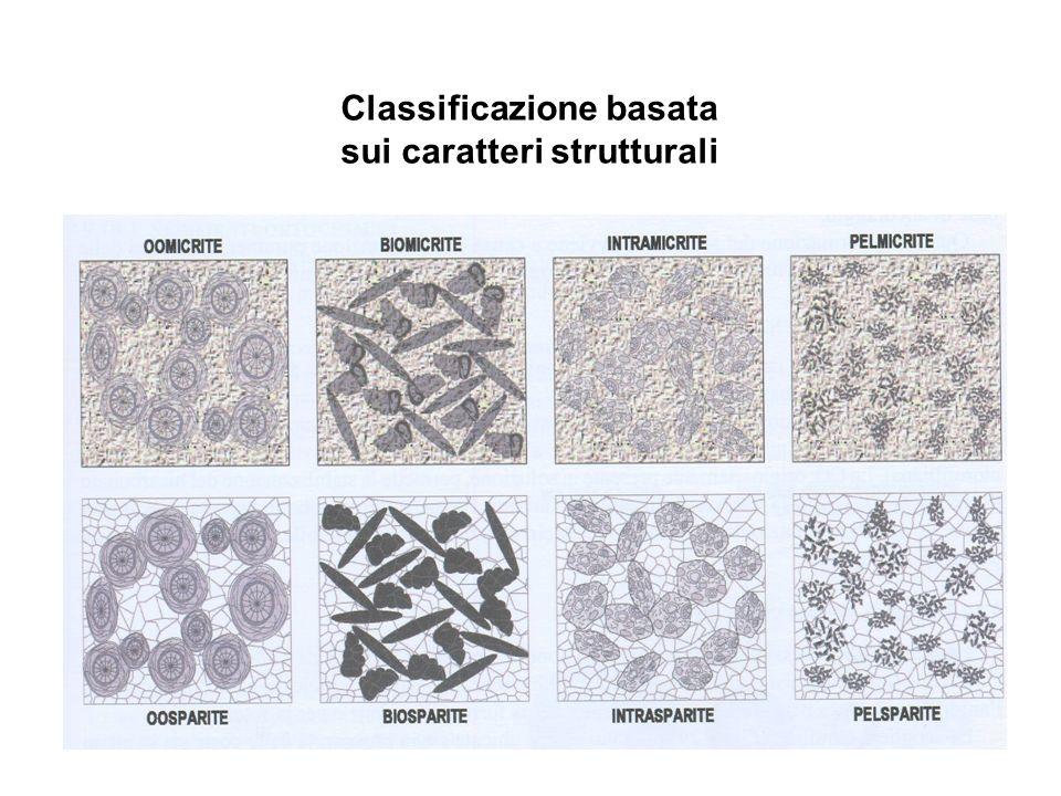 Classificazione basata sui caratteri strutturali