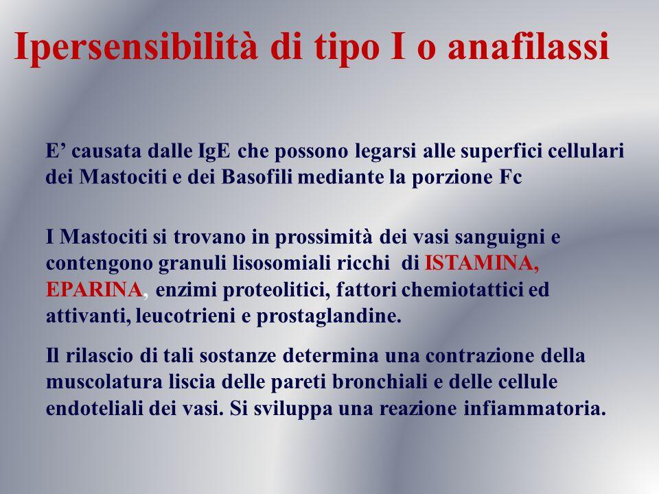 Ipersensibilità di tipo I o anafilassi E causata dalle IgE che possono legarsi alle superfici cellulari dei Mastociti e dei Basofili mediante la porzi