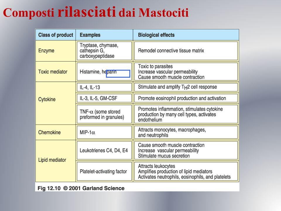 Composti rilasciati dai Mastociti