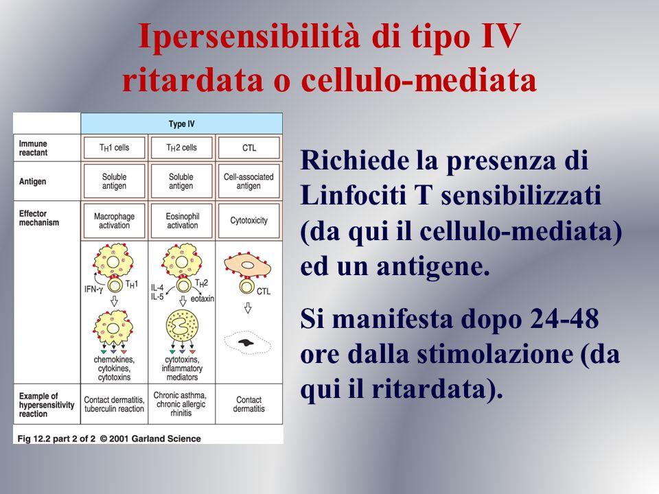 Richiede la presenza di Linfociti T sensibilizzati (da qui il cellulo-mediata) ed un antigene. Si manifesta dopo 24-48 ore dalla stimolazione (da qui