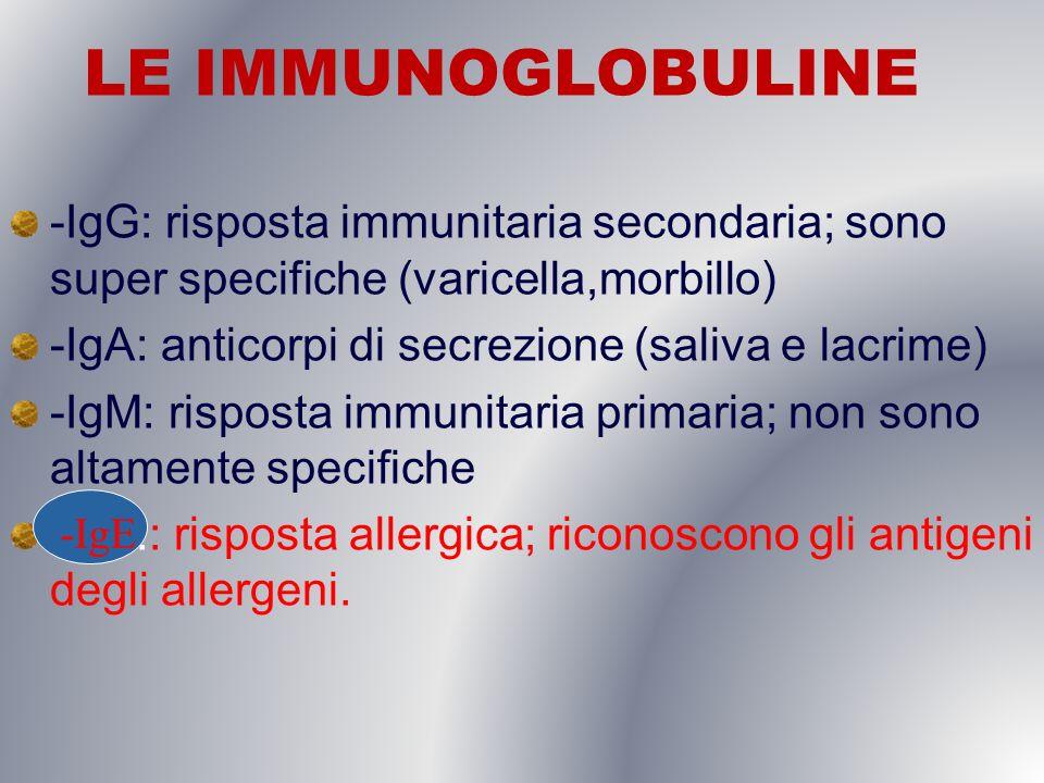 LE IMMUNOGLOBULINE -IgG: risposta immunitaria secondaria; sono super specifiche (varicella,morbillo) -IgA: anticorpi di secrezione (saliva e lacrime)