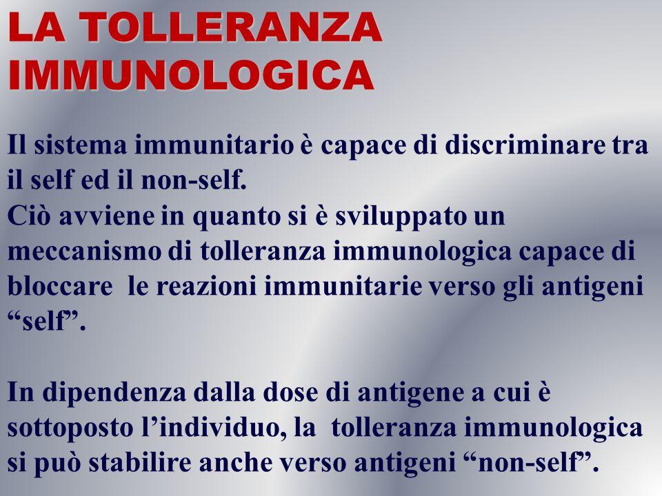 LA TOLLERANZA IMMUNOLOGICA Il sistema immunitario è capace di discriminare tra il self ed il non-self. Ciò avviene in quanto si è sviluppato un meccan