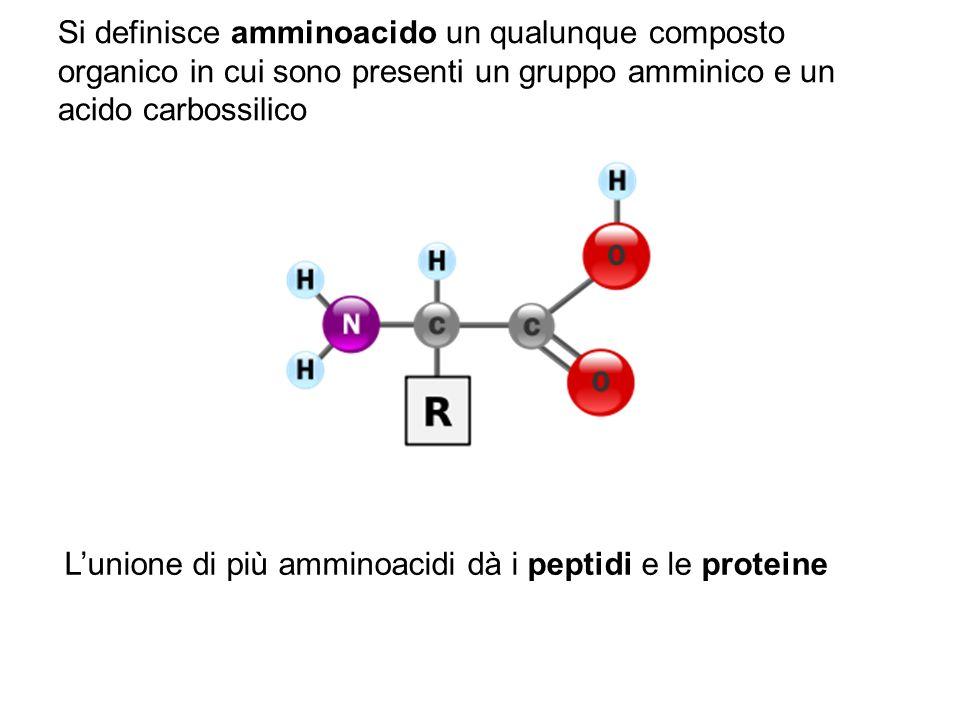 Si definisce amminoacido un qualunque composto organico in cui sono presenti un gruppo amminico e un acido carbossilico Lunione di più amminoacidi dà