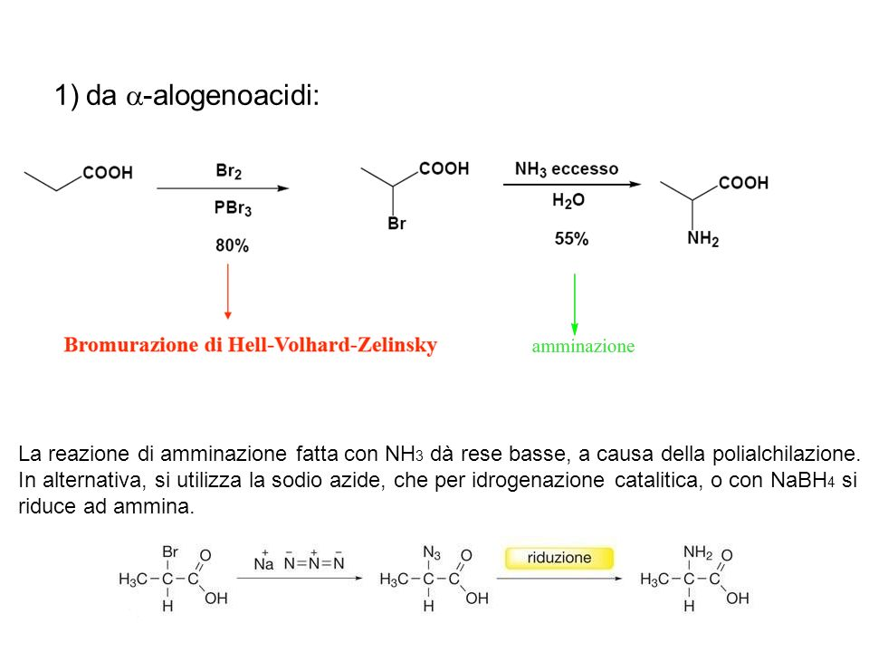 1)da -alogenoacidi: La reazione di amminazione fatta con NH 3 dà rese basse, a causa della polialchilazione. In alternativa, si utilizza la sodio azid