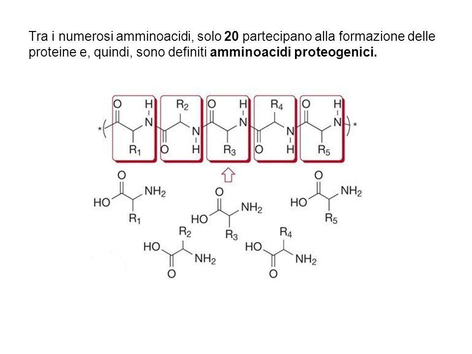 Gli amminoacidi proteogenici: Sono tutti ( la funzione NH2 è legata al C adiacente alla funzione carbossilica ) Sono tutti chirali (eccetto la glicina) Presentano stereochimica L ( il C chirale ha la stessa configurazione del C chirale della L-gliceraldeide ) Il C chirale ha una configurazione assoluta S ( ad eccezione della cisteina, che è R)