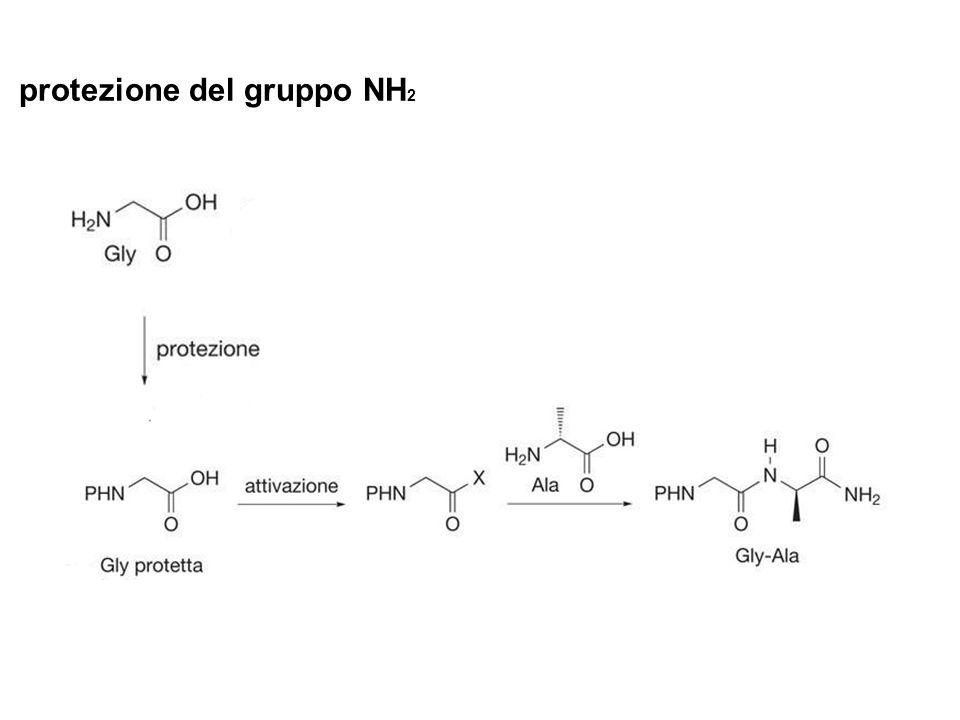 protezione del gruppo NH 2