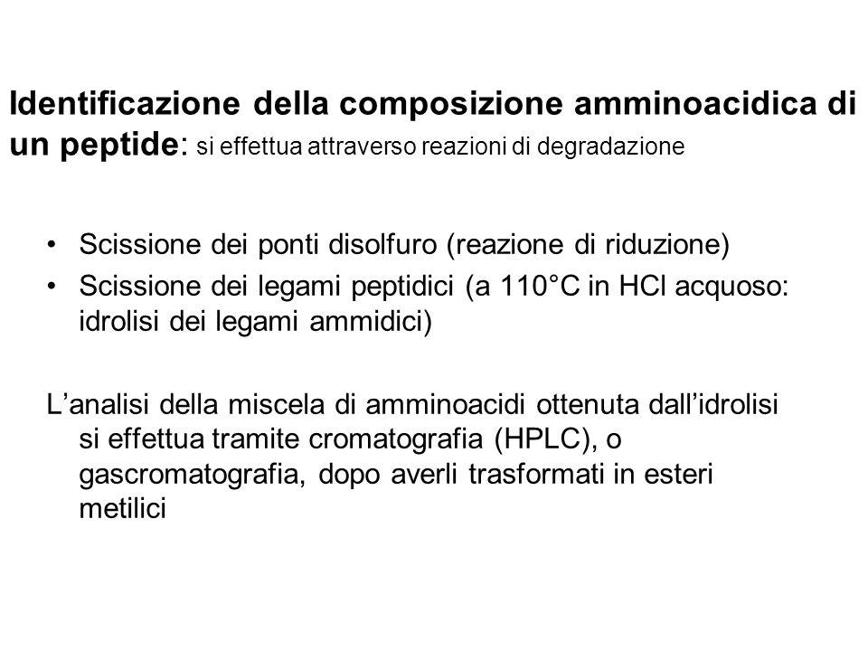 Identificazione della composizione amminoacidica di un peptide: si effettua attraverso reazioni di degradazione Scissione dei ponti disolfuro (reazion