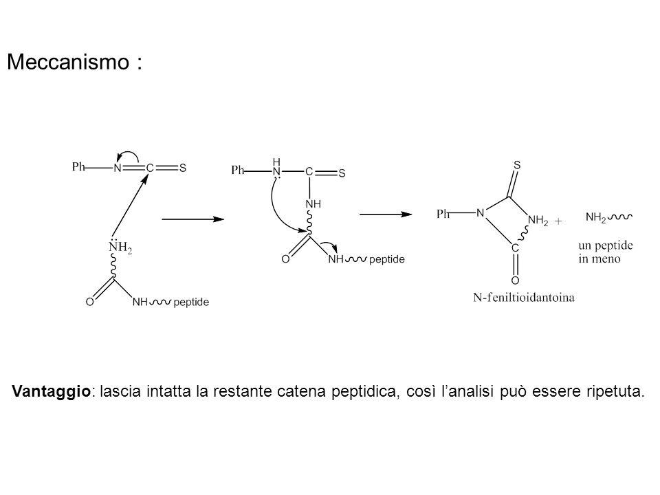 Meccanismo : Vantaggio: lascia intatta la restante catena peptidica, così lanalisi può essere ripetuta.