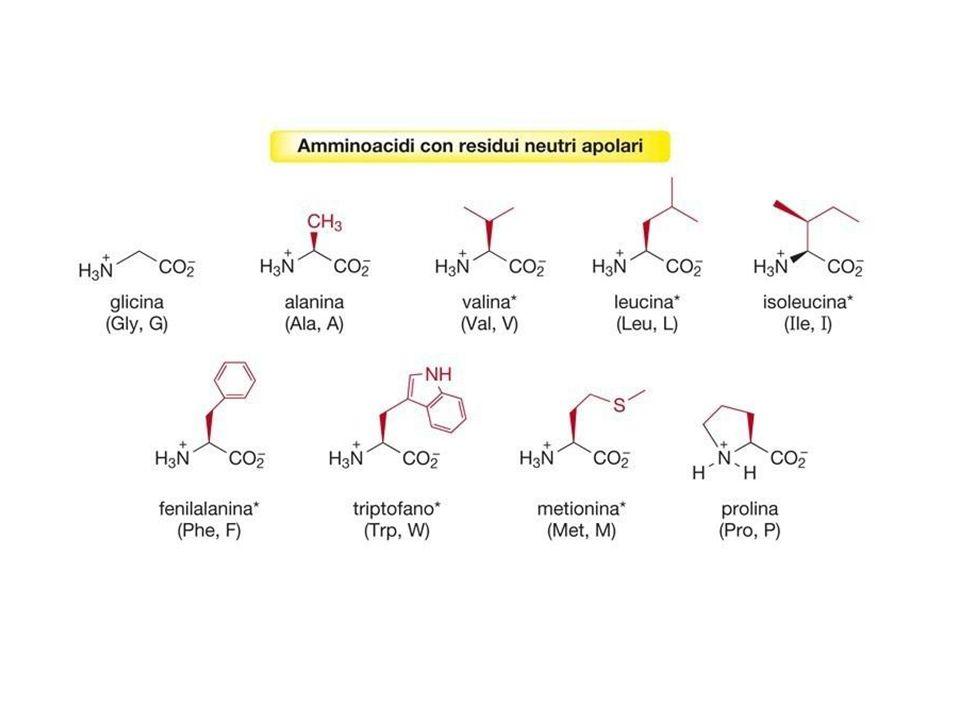 La protezione del gruppo NH 2 consiste nel rendere lN del gruppo amminico meno reattivo, cioè meno nucleofilo.