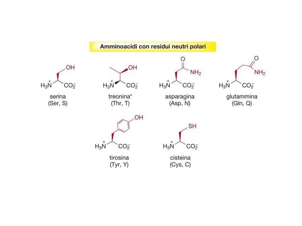 PEPTIDI Il legame che si instaura fra gli amminoacidi per formare i peptidi e le proteine è un legame ammidico, detto legame peptidico