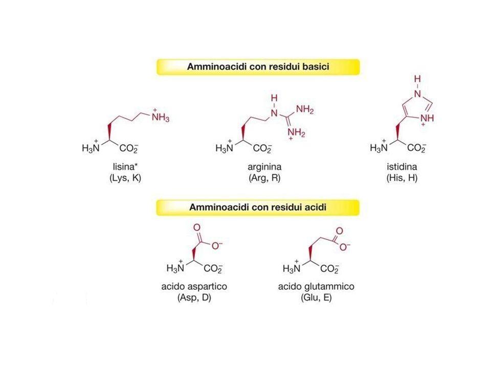 Proprietà acido-basiche degli amminoacidi Gli amminoacidi sono zwitterioni (sali interni).