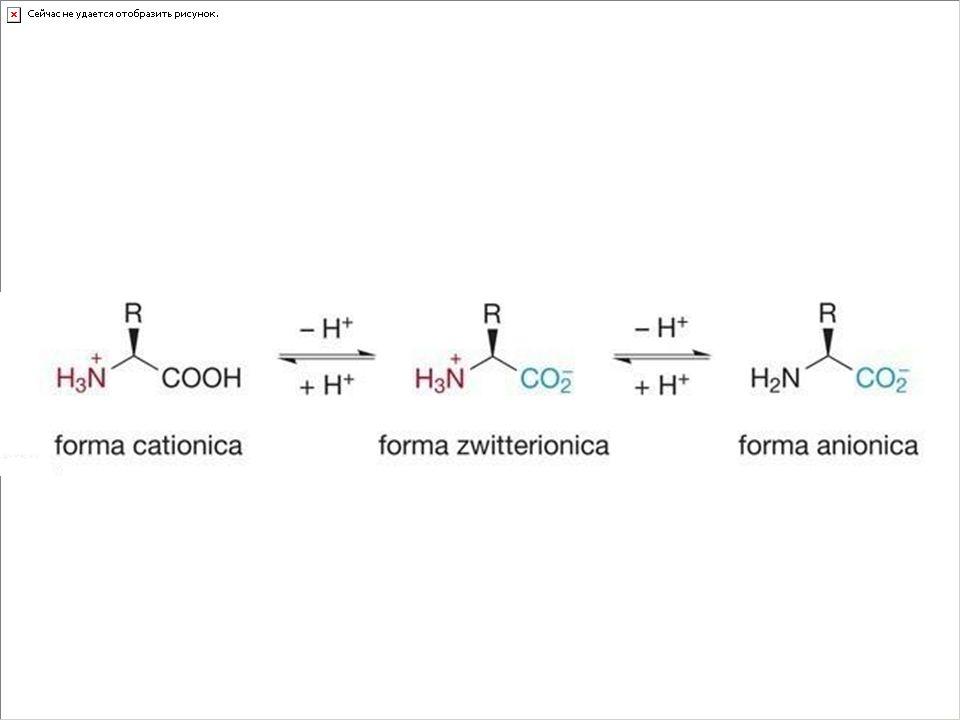 Il comportamento in soluzione acquosa viene influenzato dal pH
