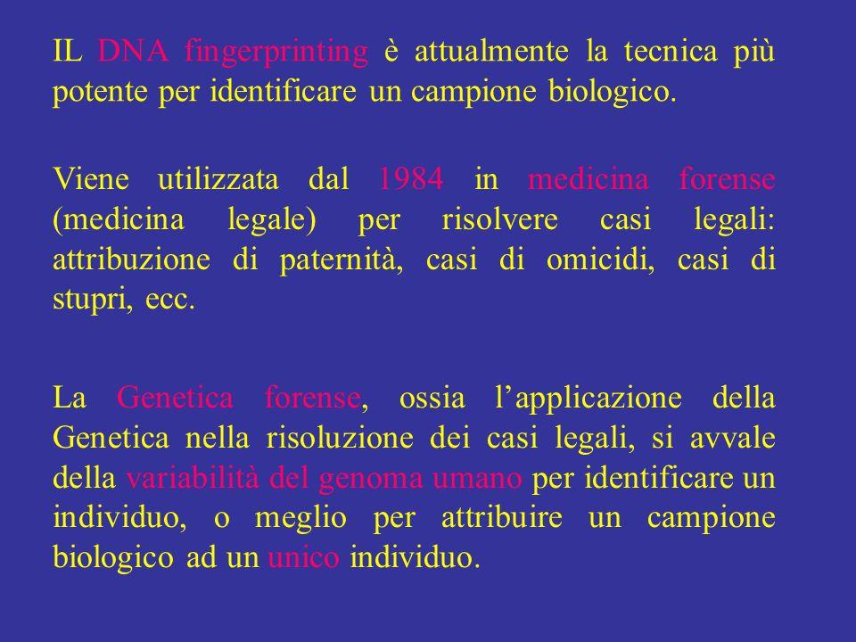 IL DNA fingerprinting è attualmente la tecnica più potente per identificare un campione biologico. Viene utilizzata dal 1984 in medicina forense (medi