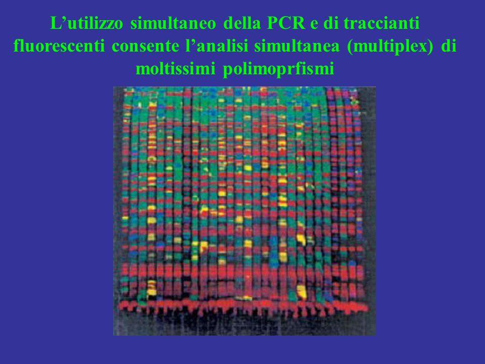 Lutilizzo simultaneo della PCR e di traccianti fluorescenti consente lanalisi simultanea (multiplex) di moltissimi polimoprfismi