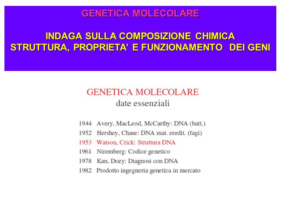 GENETICA MOLECOLARE INDAGA SULLA COMPOSIZIONE CHIMICA STRUTTURA, PROPRIETA E FUNZIONAMENTO DEI GENI