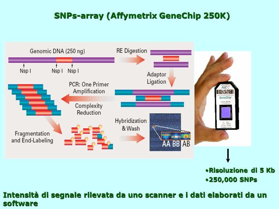 SNPs-array (Affymetrix GeneChip 250K) Risoluzione di 5 KbRisoluzione di 5 Kb 250,000 SNPs250,000 SNPs Intensità di segnale rilevata da uno scanner e i