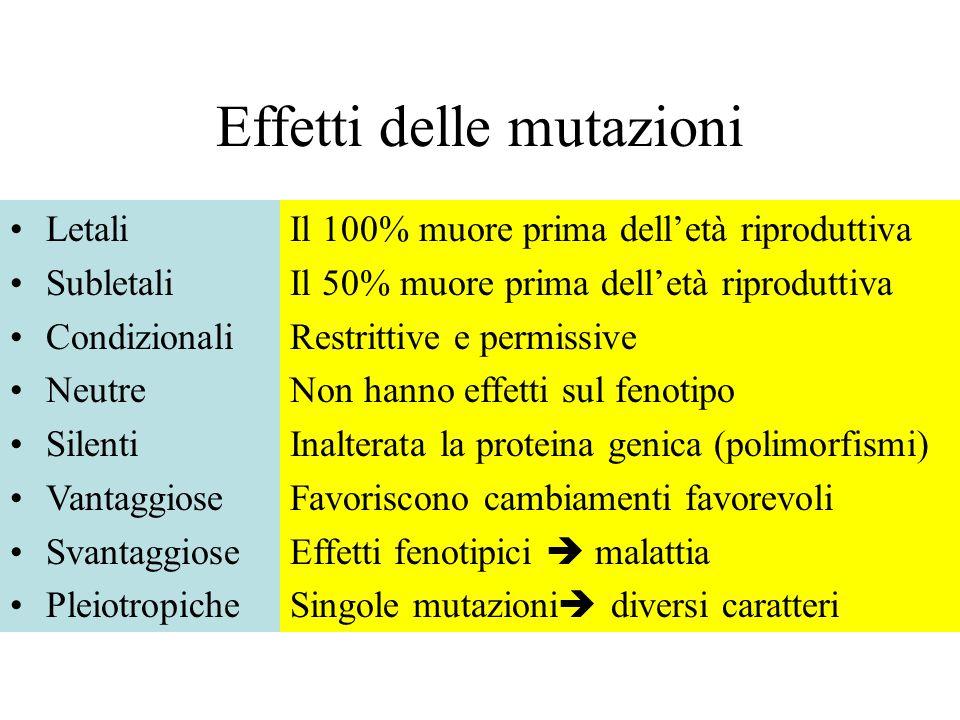 Effetti delle mutazioni Letali Subletali Condizionali Neutre Silenti Vantaggiose Svantaggiose Pleiotropiche Il 100% muore prima delletà riproduttiva I