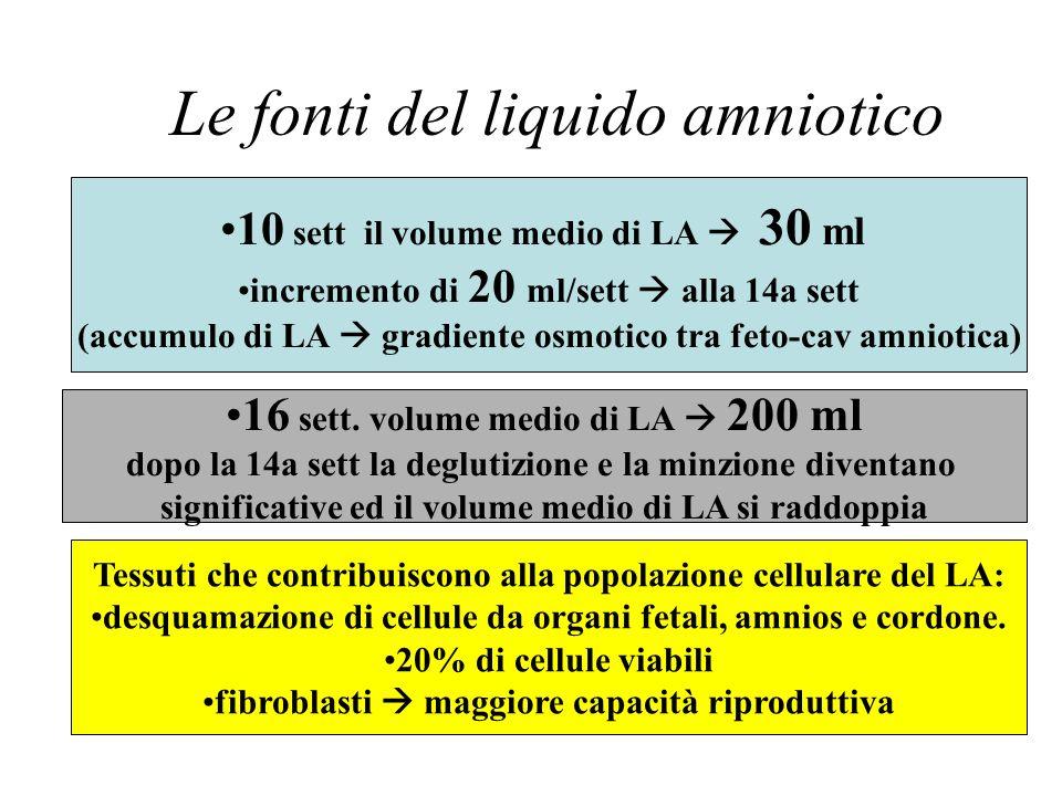Le fonti del liquido amniotico 10 sett il volume medio di LA 30 ml incremento di 20 ml/sett alla 14a sett (accumulo di LA gradiente osmotico tra feto-