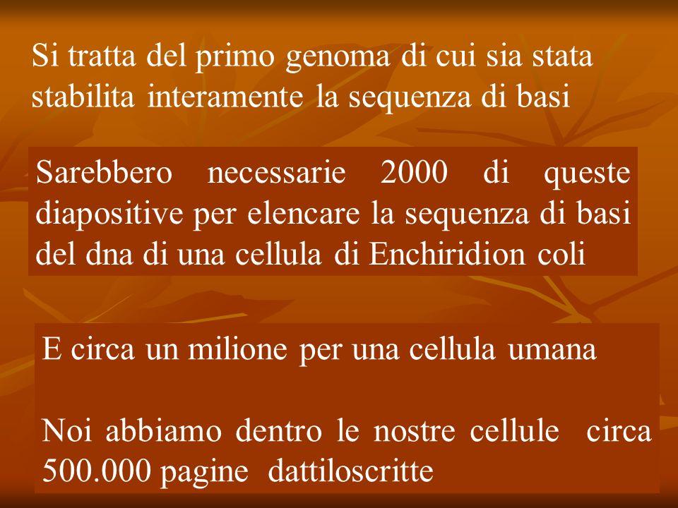 Si tratta del primo genoma di cui sia stata stabilita interamente la sequenza di basi Sarebbero necessarie 2000 di queste diapositive per elencare la sequenza di basi del dna di una cellula di Enchiridion coli E circa un milione per una cellula umana Noi abbiamo dentro le nostre cellule circa 500.000 pagine dattiloscritte