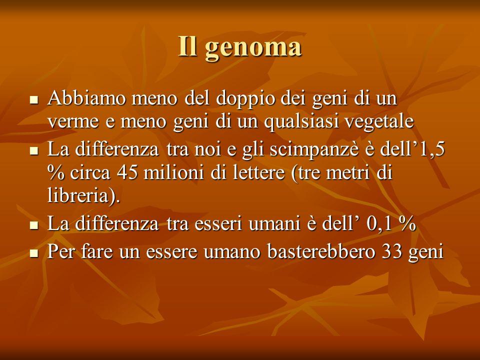 Il genoma Abbiamo meno del doppio dei geni di un verme e meno geni di un qualsiasi vegetale Abbiamo meno del doppio dei geni di un verme e meno geni di un qualsiasi vegetale La differenza tra noi e gli scimpanzè è dell1,5 % circa 45 milioni di lettere (tre metri di libreria).