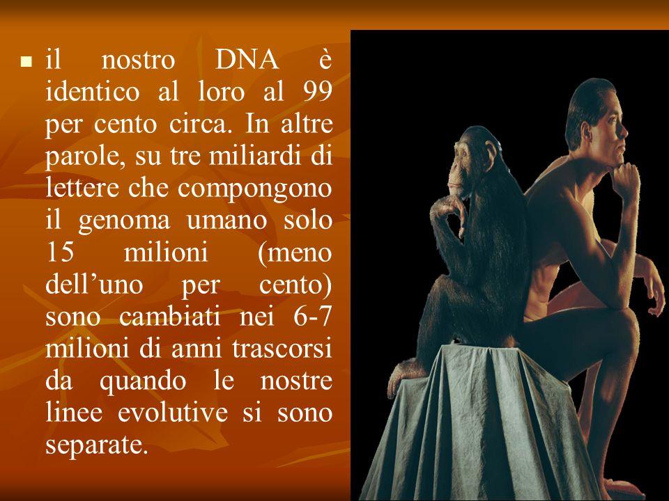 il nostro DNA è identico al loro al 99 per cento circa.