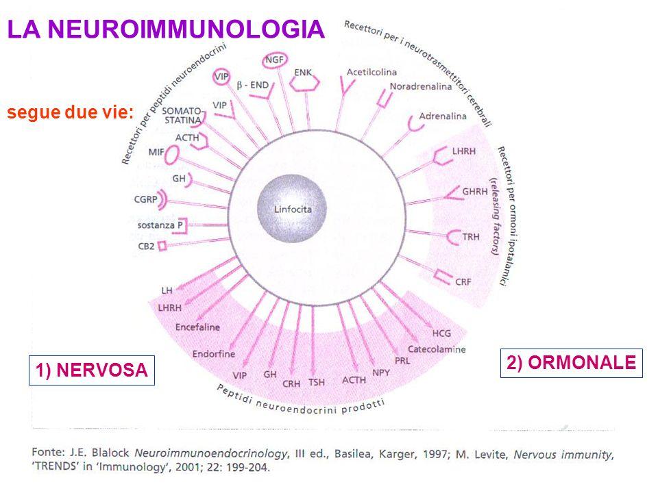 LA NEUROIMMUNOLOGIA segue due vie: 1) NERVOSA 2) ORMONALE