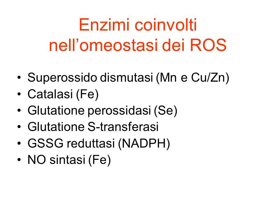 Enzimi coinvolti nellomeostasi dei ROS Superossido dismutasi (Mn e Cu/Zn) Catalasi (Fe) Glutatione perossidasi (Se) Glutatione S-transferasi GSSG redu