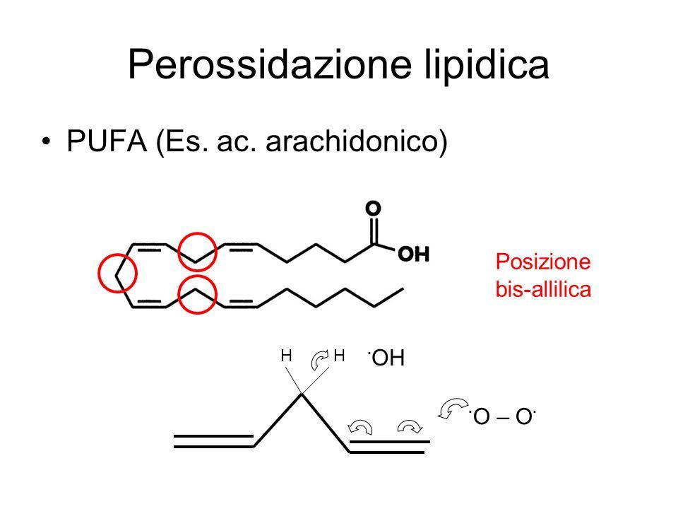 Perossidazione lipidica PUFA (Es. ac. arachidonico) HH · O – O · · OH Posizione bis-allilica