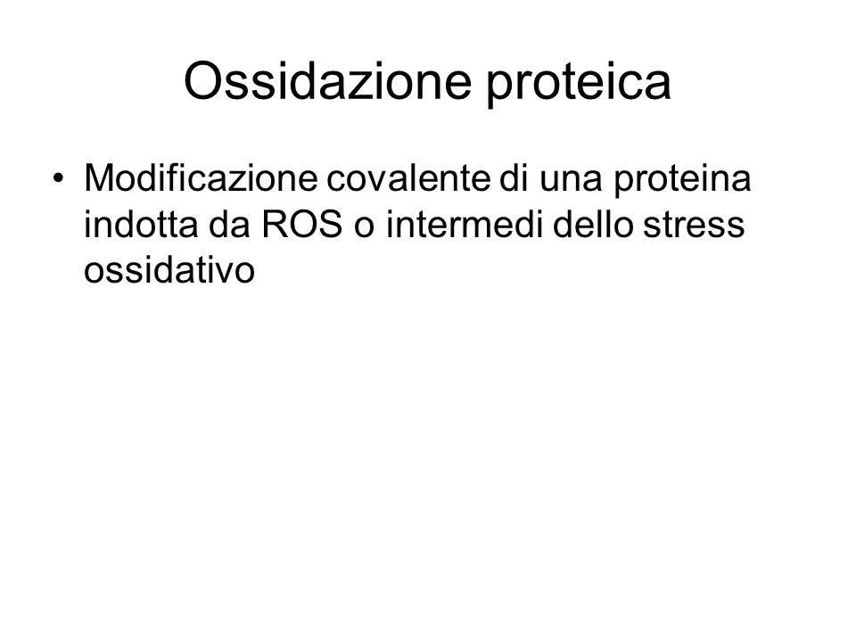 Ossidazione proteica Modificazione covalente di una proteina indotta da ROS o intermedi dello stress ossidativo