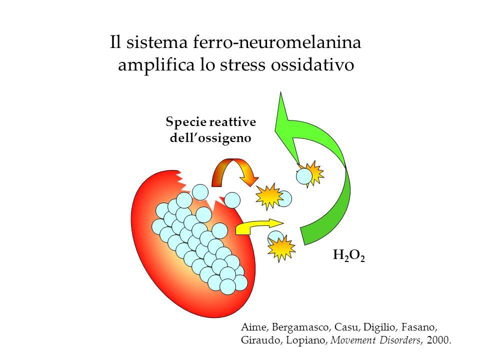 Il sistema ferro-neuromelanina amplifica lo stress ossidativo H2O2H2O2 Specie reattive dellossigeno Aime, Bergamasco, Casu, Digilio, Fasano, Giraudo,