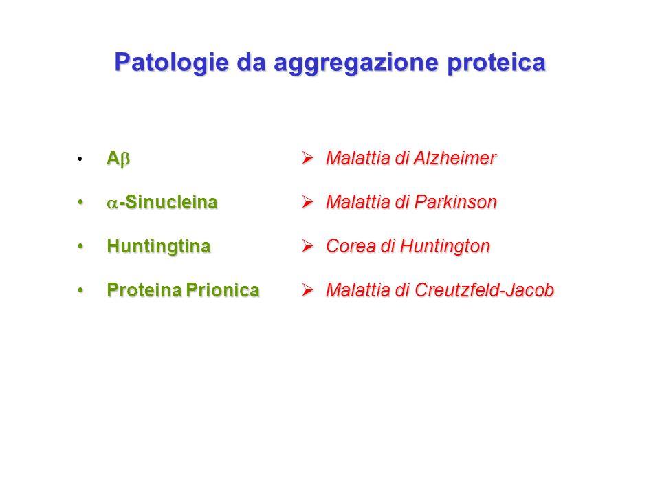 Patologie da aggregazione proteica A A -Sinucleina -Sinucleina Huntingtina Huntingtina Proteina Prionica Proteina Prionica Malattia di Alzheimer Malat
