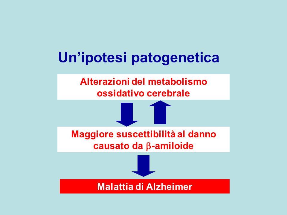 Alterazioni del metabolismo ossidativo cerebrale Maggiore suscettibilità al danno causato da -amiloide Malattia di Alzheimer Unipotesi patogenetica