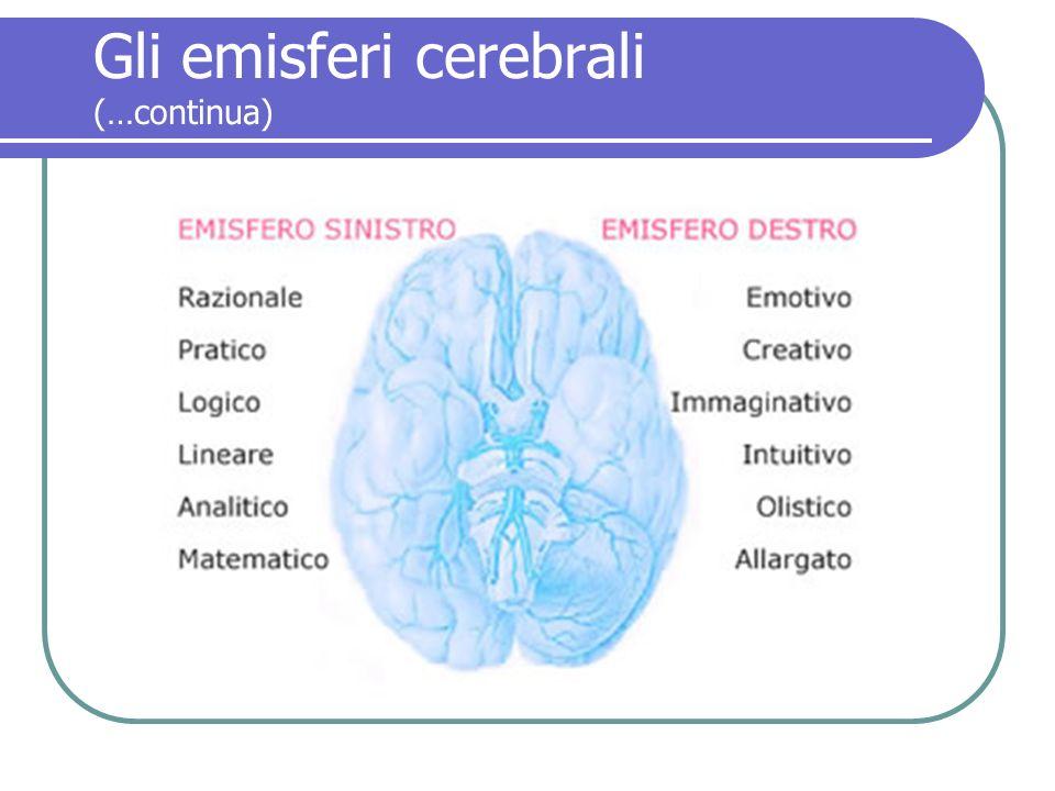 Gli emisferi cerebrali (…continua)