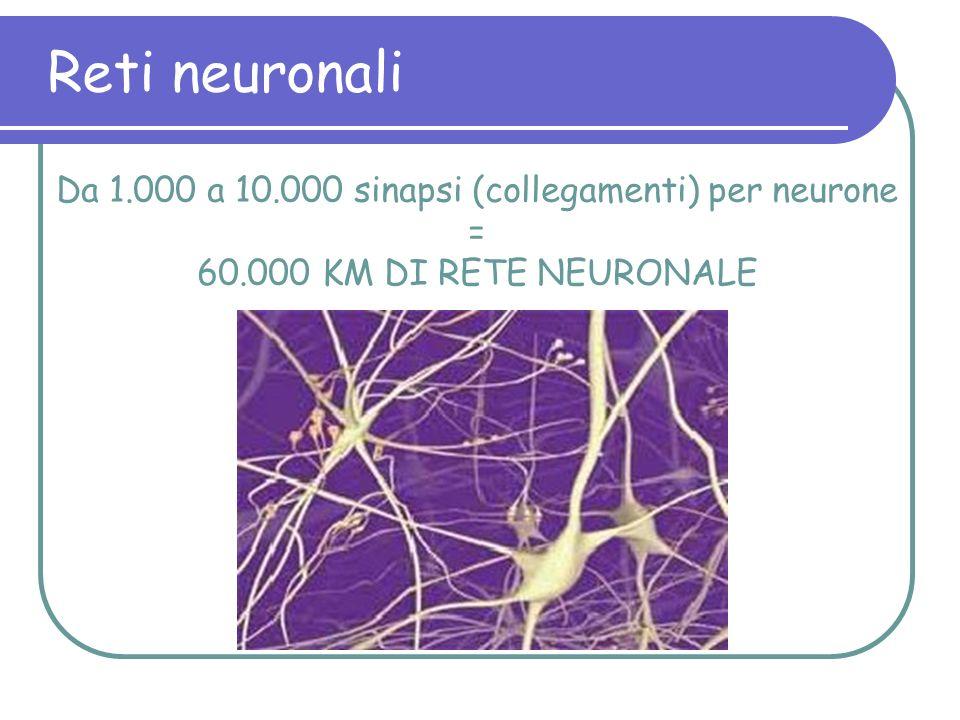 Reti neuronali Da 1.000 a 10.000 sinapsi (collegamenti) per neurone = 60.000 KM DI RETE NEURONALE