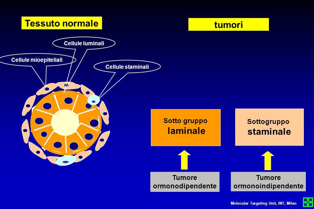 Sotto gruppo laminale Sottogruppo staminale Tessuto normale tumori Tumore ormonodipendente Tumore ormonoindipendente Molecular Targeting Unit, INT, Mi