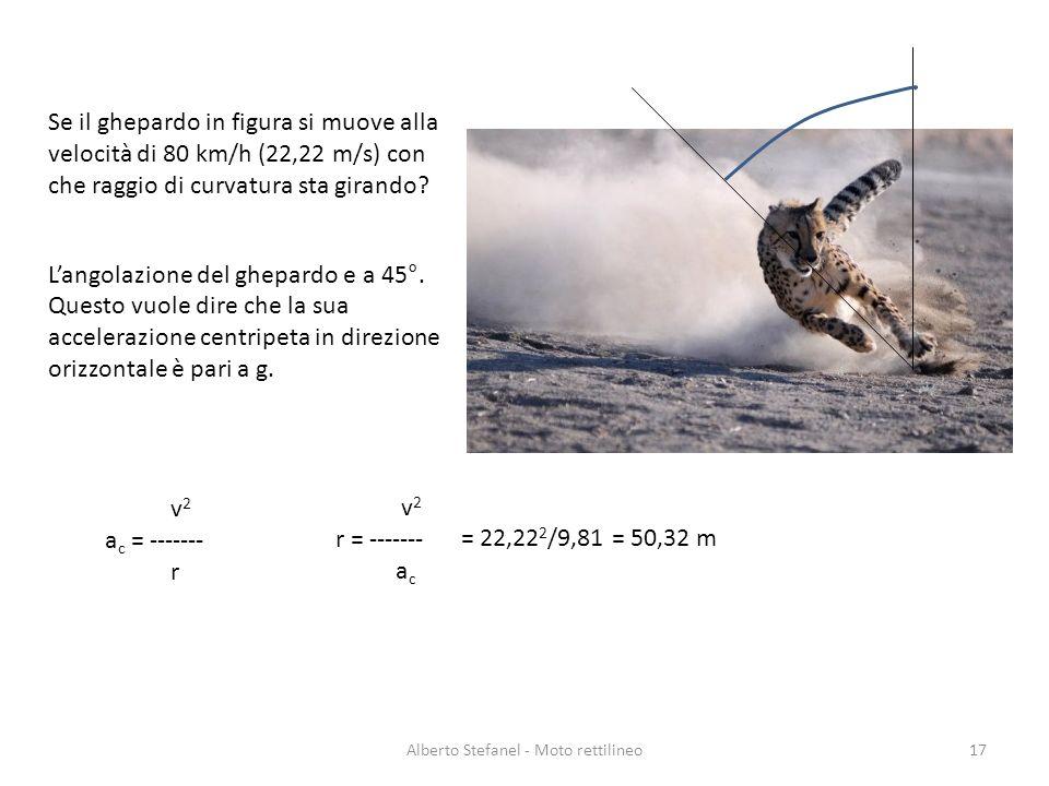 Alberto Stefanel - Moto rettilineo17 Se il ghepardo in figura si muove alla velocità di 80 km/h (22,22 m/s) con che raggio di curvatura sta girando? L