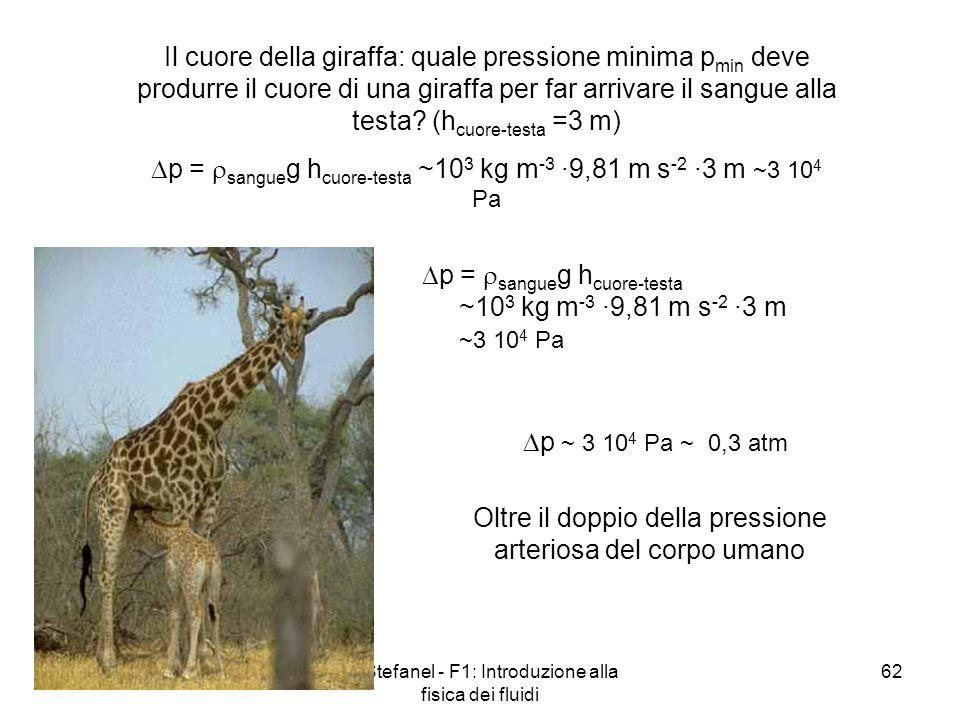A. Stefanel - F1: Introduzione alla fisica dei fluidi 62 Il cuore della giraffa: quale pressione minima p min deve produrre il cuore di una giraffa pe