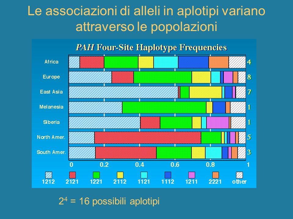 Le associazioni di alleli in aplotipi variano attraverso le popolazioni 2 4 = 16 possibili aplotipi