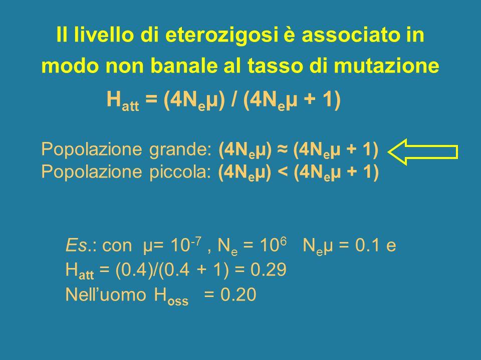 Il livello di eterozigosi è associato in modo non banale al tasso di mutazione H att = (4N e µ) / (4N e µ + 1) Popolazione grande: (4N e µ) (4N e µ +
