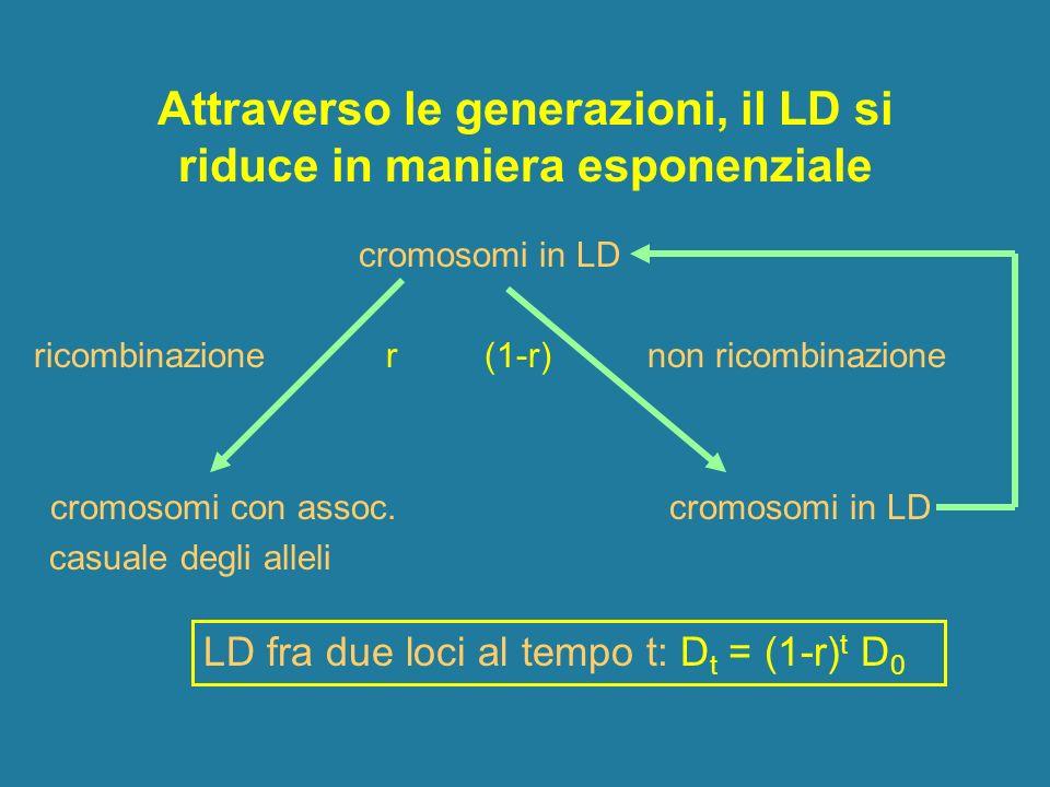 Attraverso le generazioni, il LD si riduce in maniera esponenziale cromosomi in LD ricombinazione r (1-r) non ricombinazione cromosomi con assoc. crom
