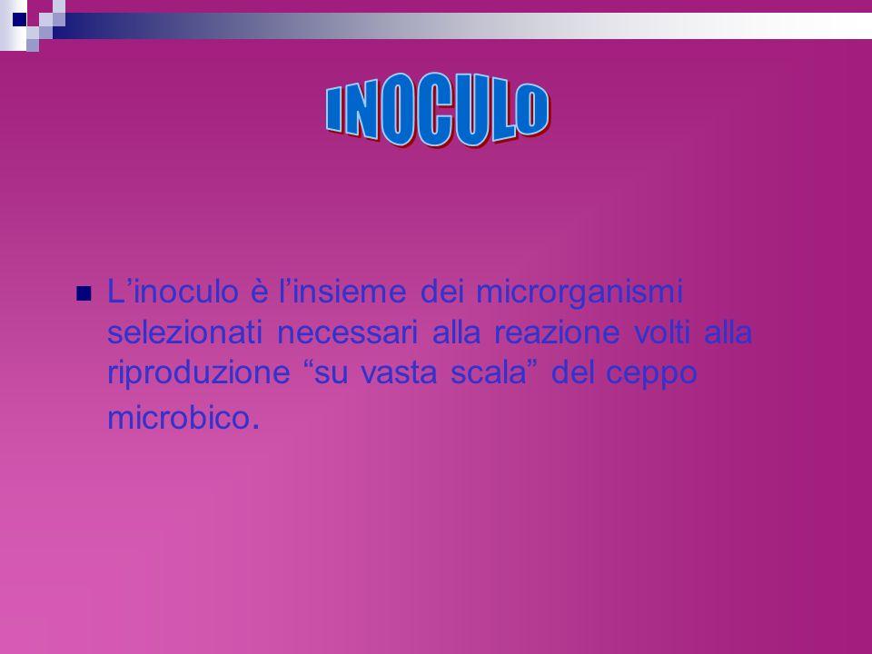 Linoculo è linsieme dei microrganismi selezionati necessari alla reazione volti alla riproduzione su vasta scala del ceppo microbico.