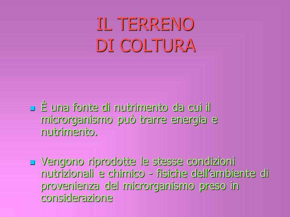 IL TERRENO DI COLTURA È una fonte di nutrimento da cui il microrganismo può trarre energia e nutrimento. Vengono riprodotte le stesse condizioni nutri