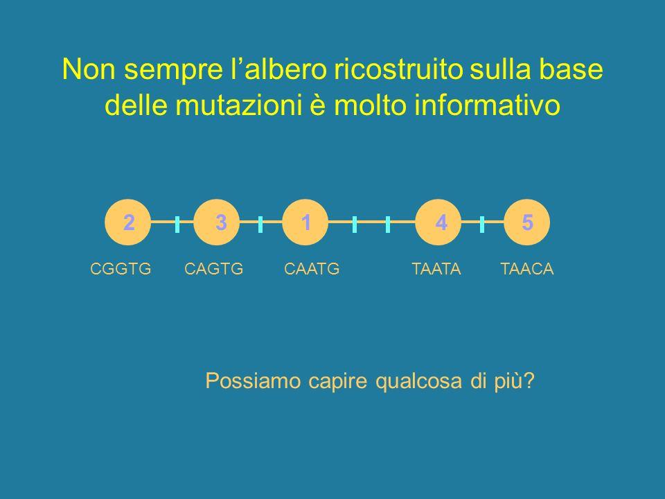 Non sempre lalbero ricostruito sulla base delle mutazioni è molto informativo 2 3 1 4 5 CAATGCGGTGCAGTGTAATATAACA Possiamo capire qualcosa di più?