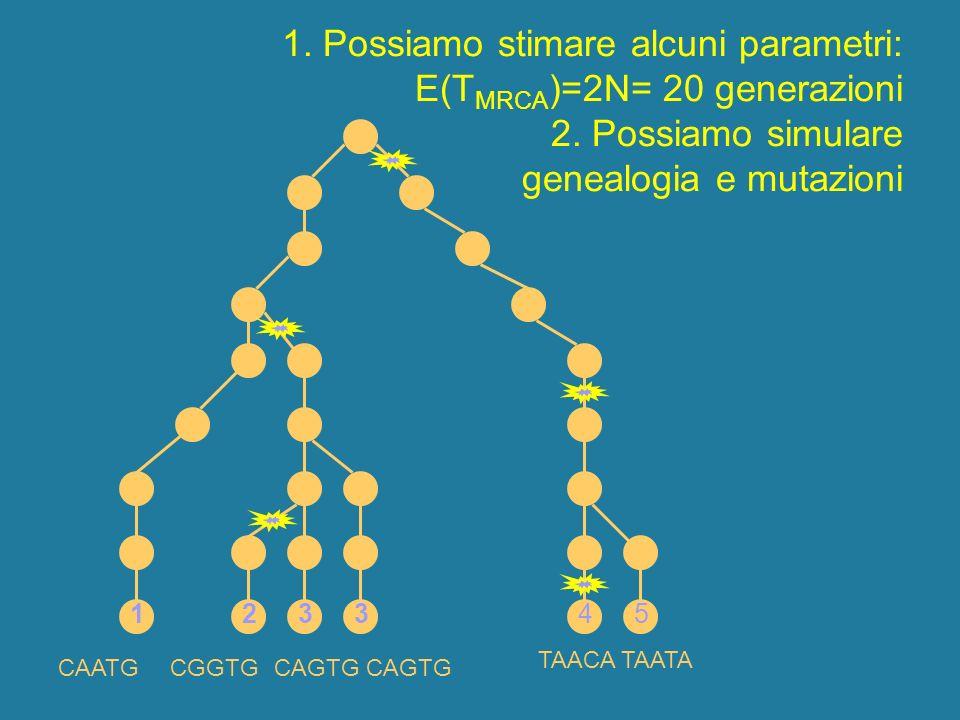 1. Possiamo stimare alcuni parametri: E(T MRCA )=2N= 20 generazioni 2. Possiamo simulare genealogia e mutazioni 1 CAATGCAGTG CGGTG TAACA TAATA 123345