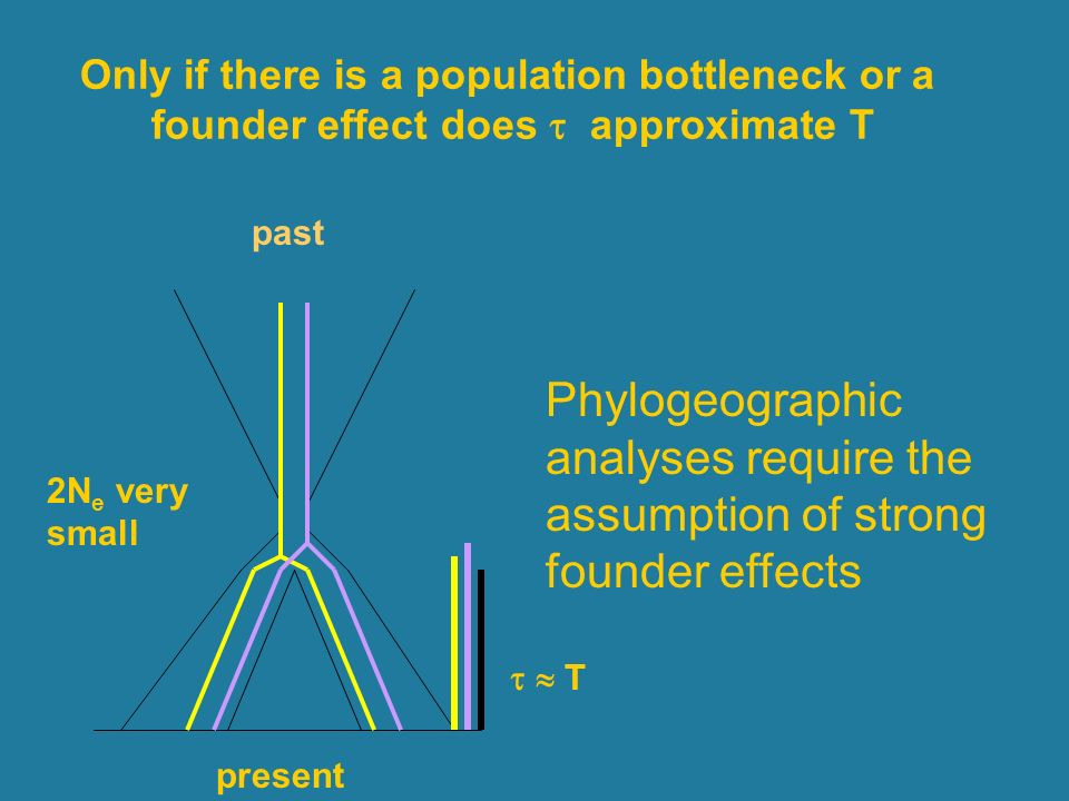 T 2N e very small present past Only if there is a population bottleneck or a founder effect does approximate T Phylogeographic analyses require the assumption of strong founder effects