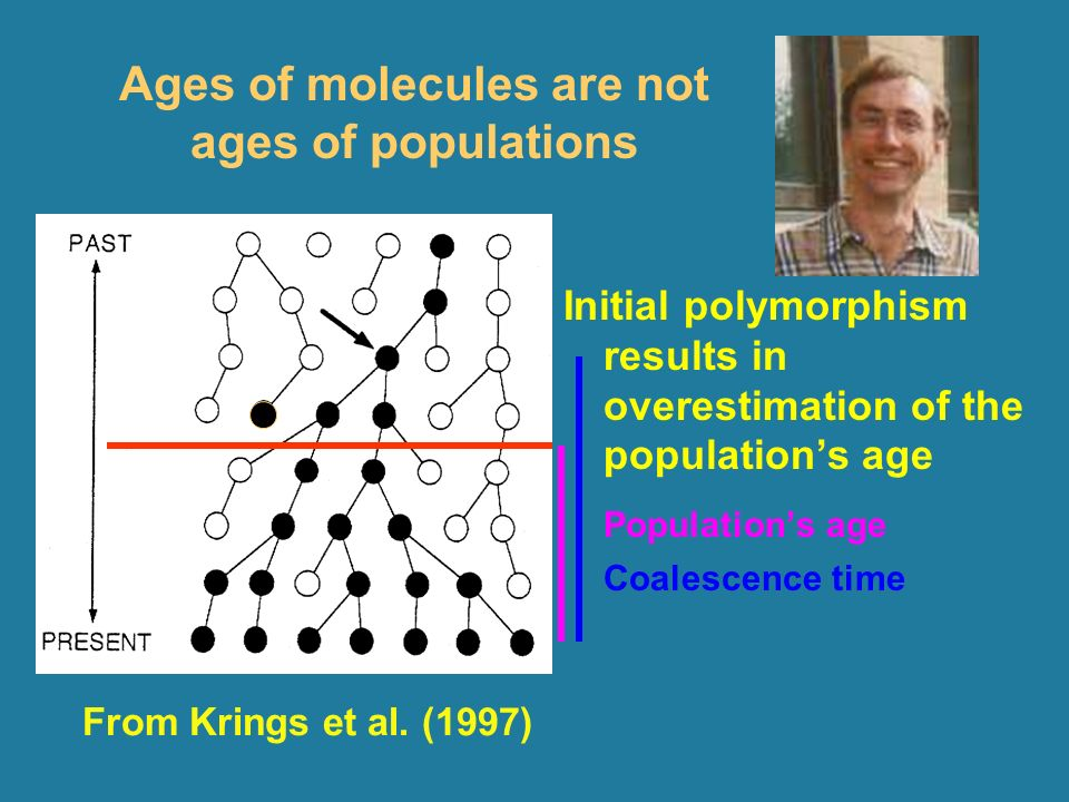 Ages of molecules are not ages of populations Initial polymorphism results in overestimation of the populations age Populations age Coalescence time From Krings et al.