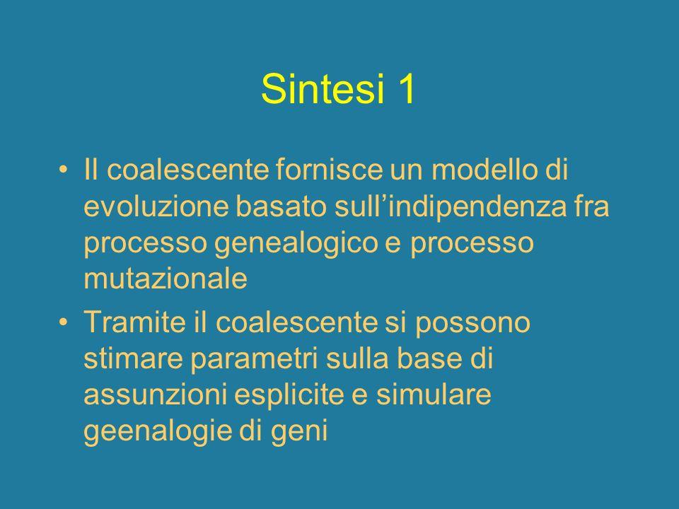 Sintesi 1 Il coalescente fornisce un modello di evoluzione basato sullindipendenza fra processo genealogico e processo mutazionale Tramite il coalesce