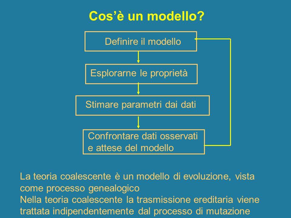 Cosè un modello? La teoria coalescente è un modello di evoluzione, vista come processo genealogico Nella teoria coalescente la trasmissione ereditaria