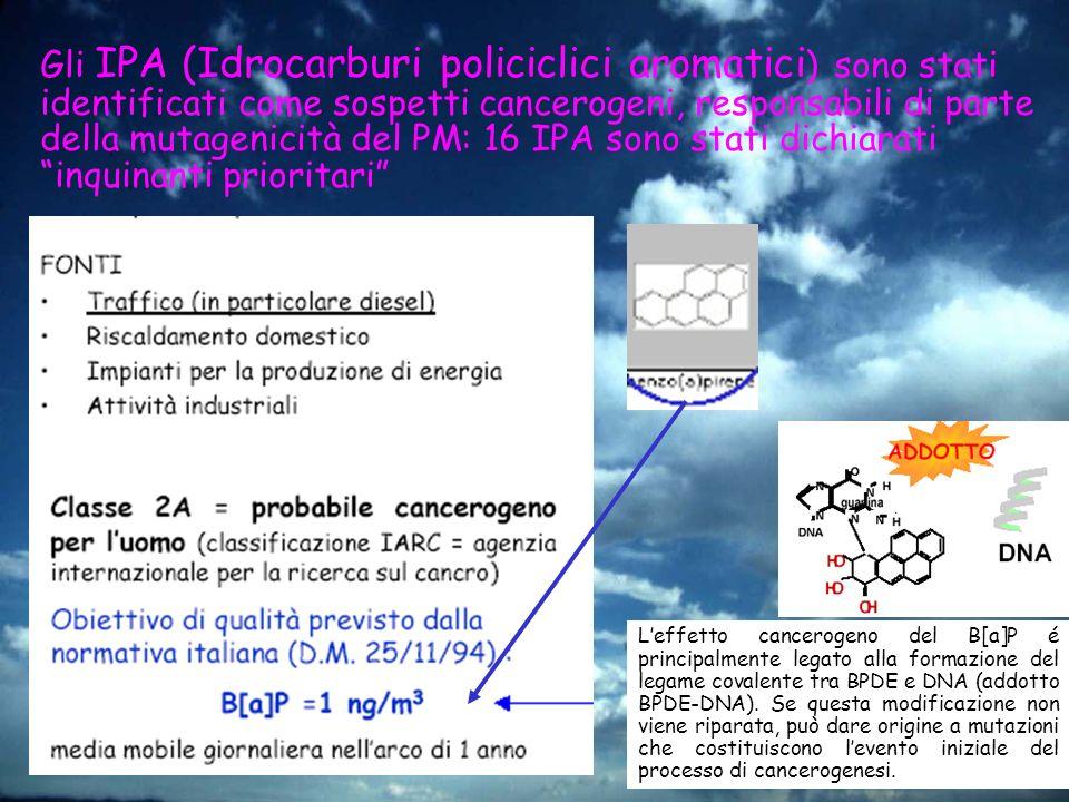Gli IPA (Idrocarburi policiclici aromatici ) sono stati identificati come sospetti cancerogeni, responsabili di parte della mutagenicità del PM: 16 IP