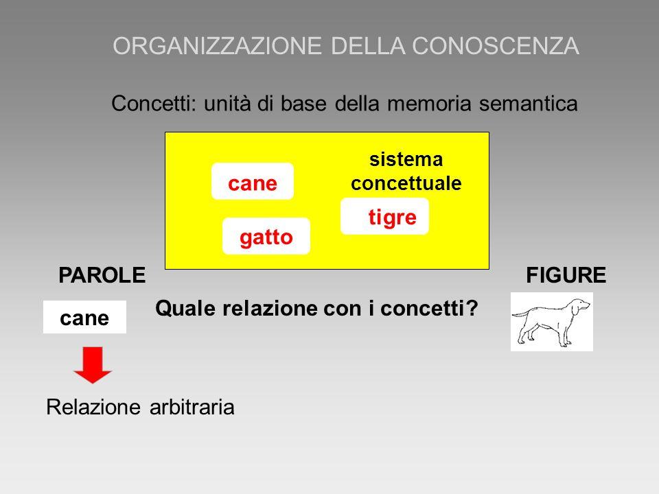 PAROLE FIGURE cane Quale relazione con i concetti? sistema concettuale cane tigregatto Concetti: unità di base della memoria semantica Relazione arbit